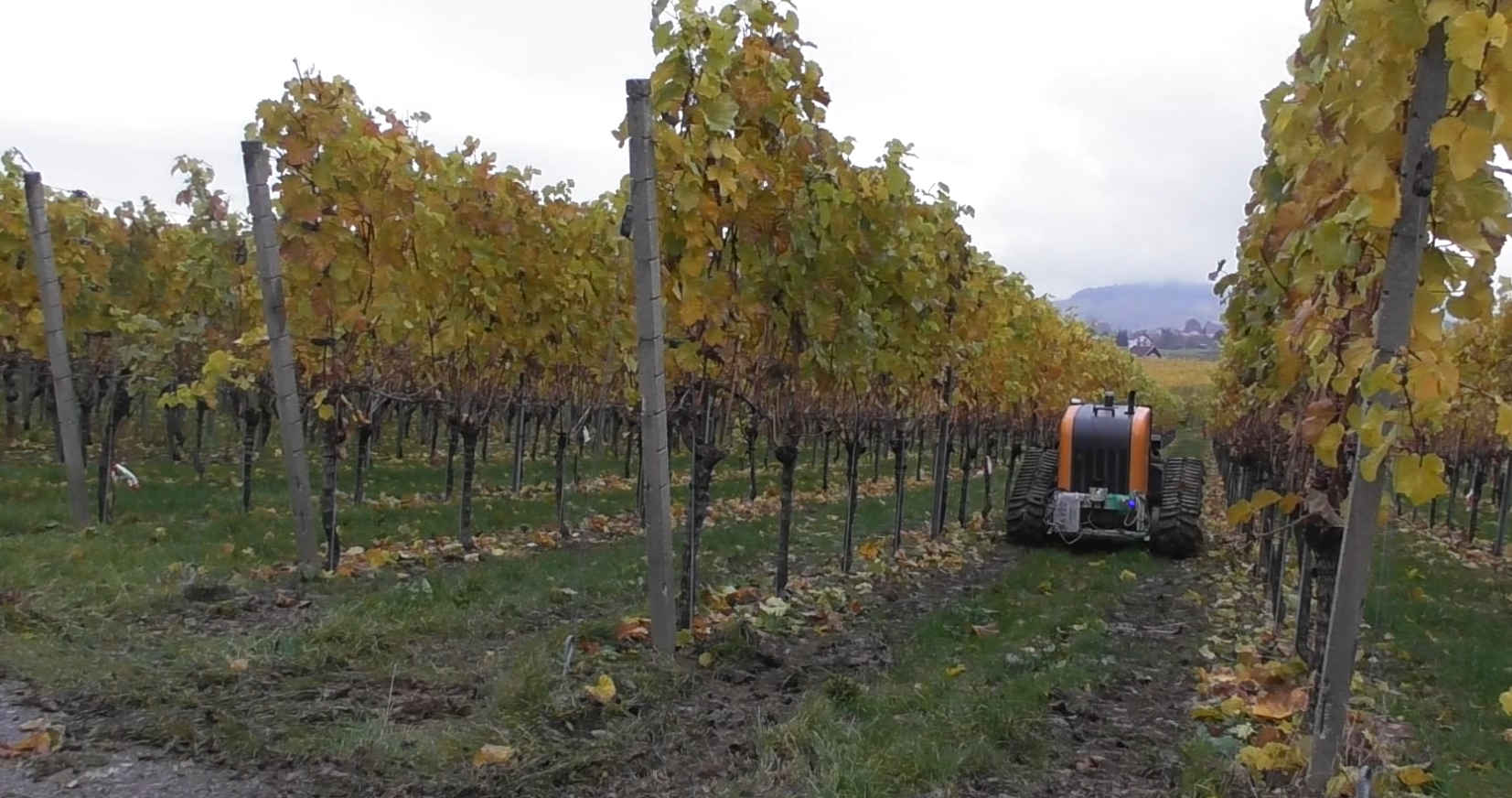 The vineyard crawler while working in a vineyard
